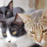 «Οι γάτες δημιουργούν δεσμούς με τους ανθρώπους» – Newsbeast