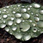 Τεχνητό  φύλλο που θα βοηθήσει στη μάχη κατά της κλιματικής αλλαγής