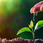 Ευάλωτα στην κλιματική αλλαγή, τέσσερα στα δέκα είδη φυτών της Γης