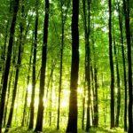 Πώς θα επηρεάσει γεωργία, δάση, νερό η μεταβολή του κλίματος