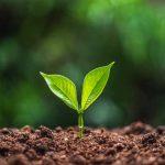Το ΚΕΠΕ, σύμβουλος της Περιφέρειας Πελοποννήσου στα θέματα της μετάβασης στη μεταλιγνιτική εποχής