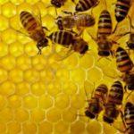 Μείωση της παραγωγικότητας των μελισσών, από την κλιματική αλλαγή