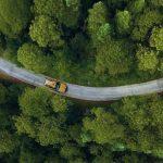 WWF: Χάθηκαν 430 εκατομμύρια στρέμματα δασών